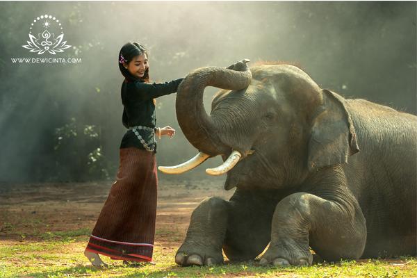 mani gajah