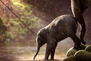 Kehebatan Mantra Mani Gajah yang Tergolong Pelet Kelas Berat! Amalkan Segera