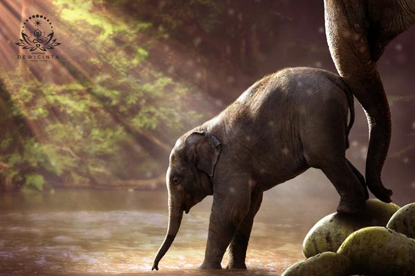 mantra mani gajah